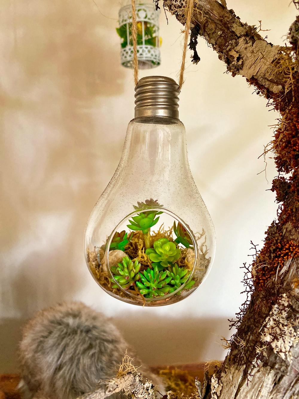 clear glass bottle with green leaves