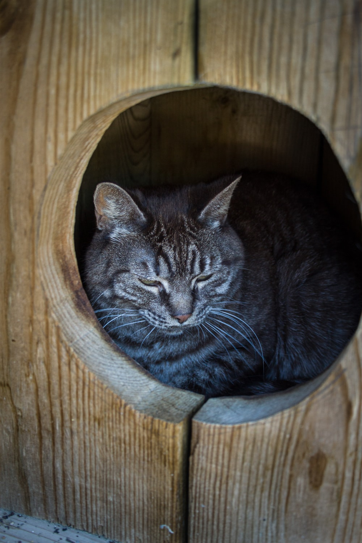 black tabby cat in brown wooden pet bed