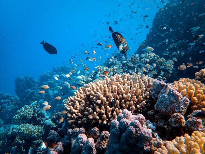 The Underwater Treasures: Coral Reefs