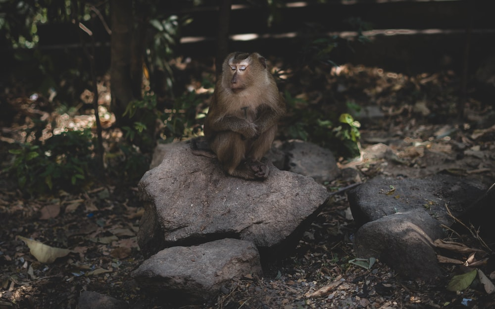brown monkey sitting on gray rock during daytime