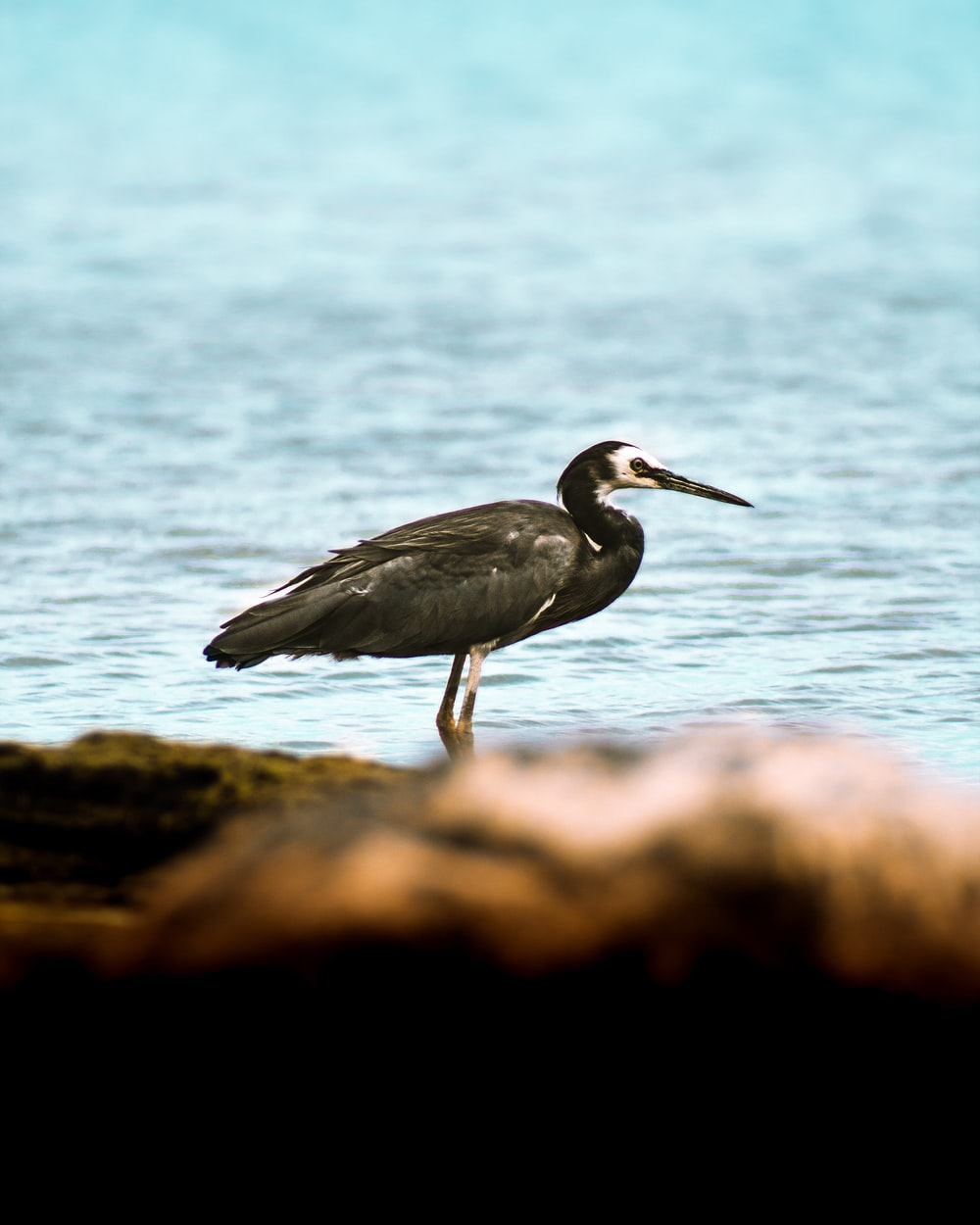 grey heron on brown rock near body of water during daytime
