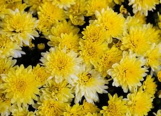 yellow flowers in macro lens