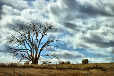 leafless tree under cloudy sky during daytime kansas zoom background
