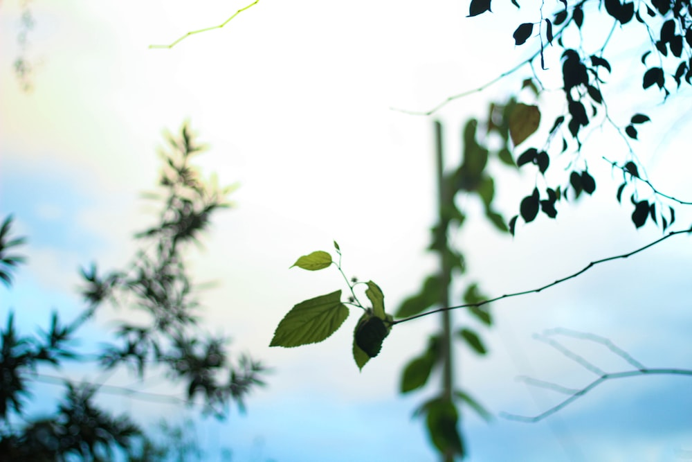green leaves during day time