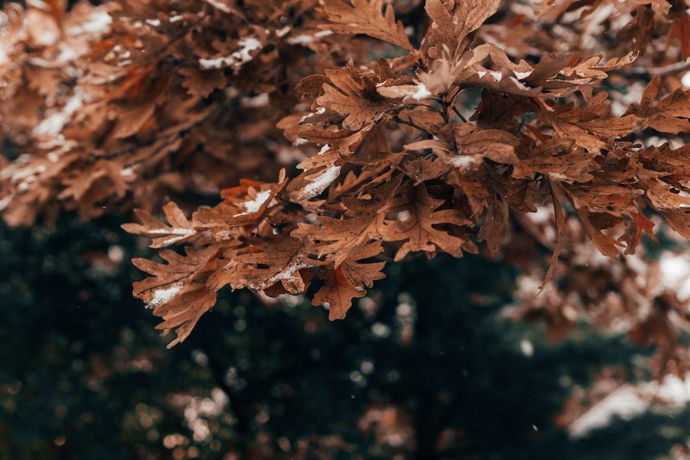 brown dried leaves on water