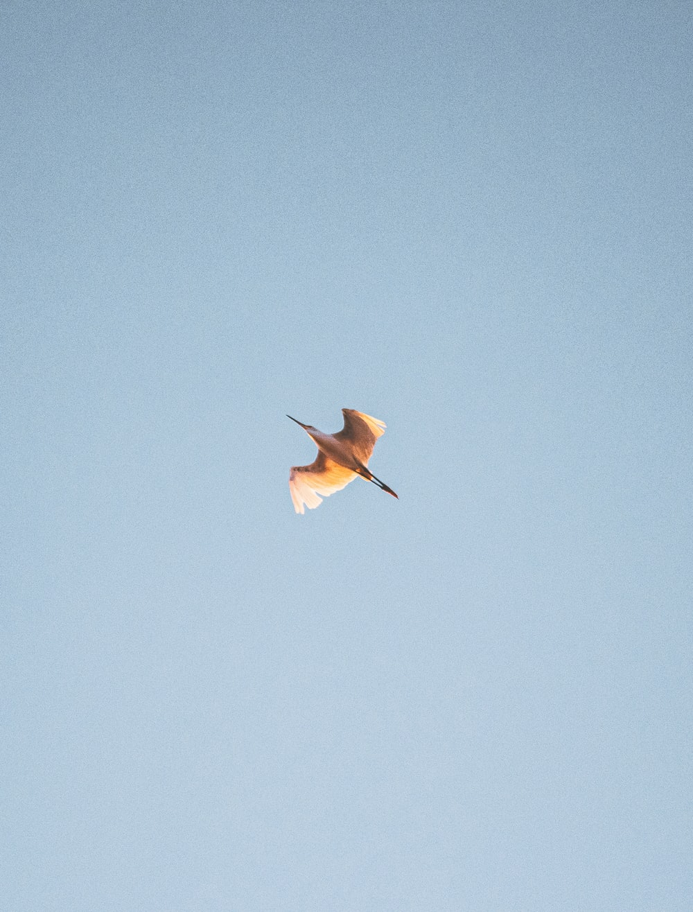 brown bird flying under blue sky during daytime