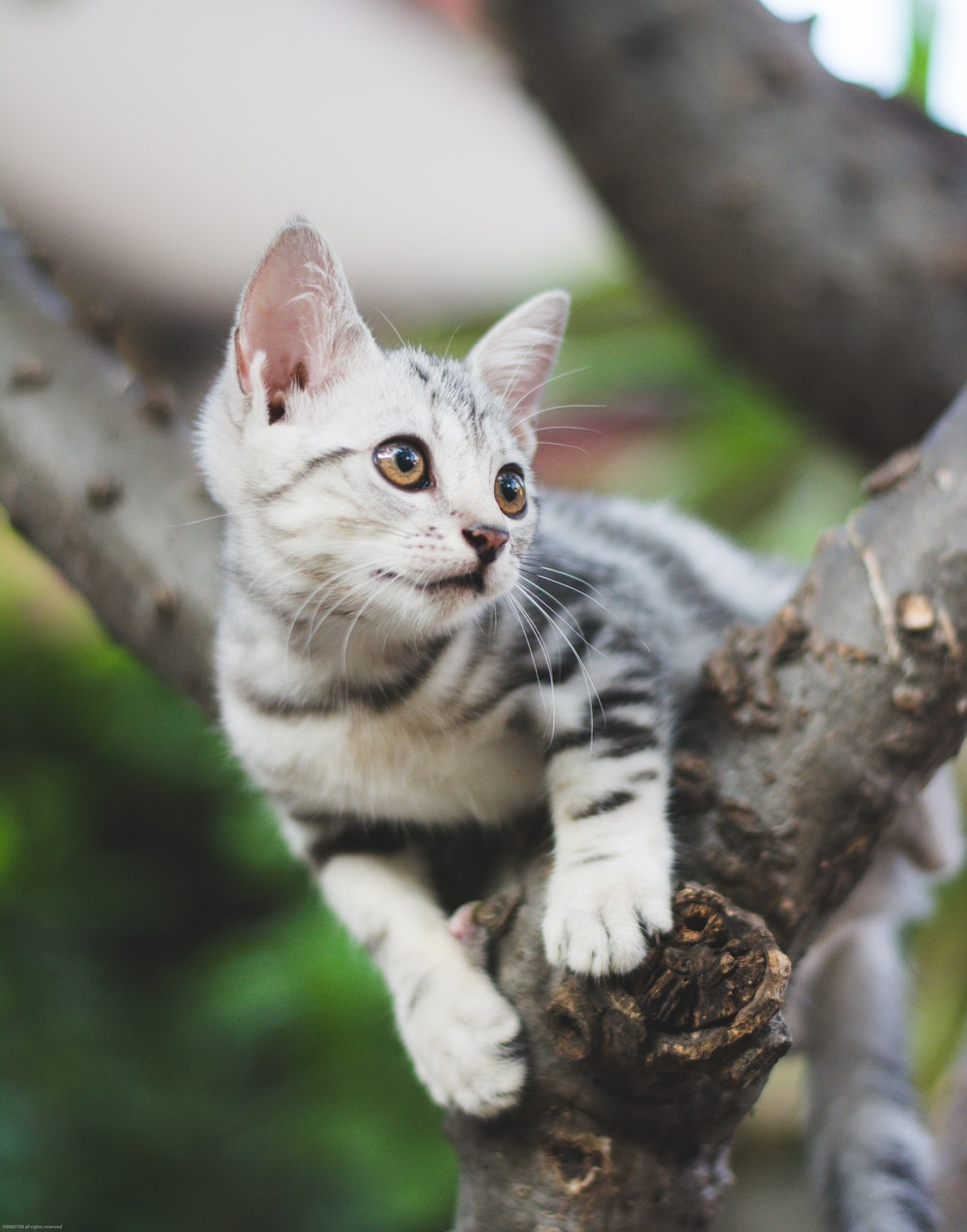 white and black cat on brown tree branch