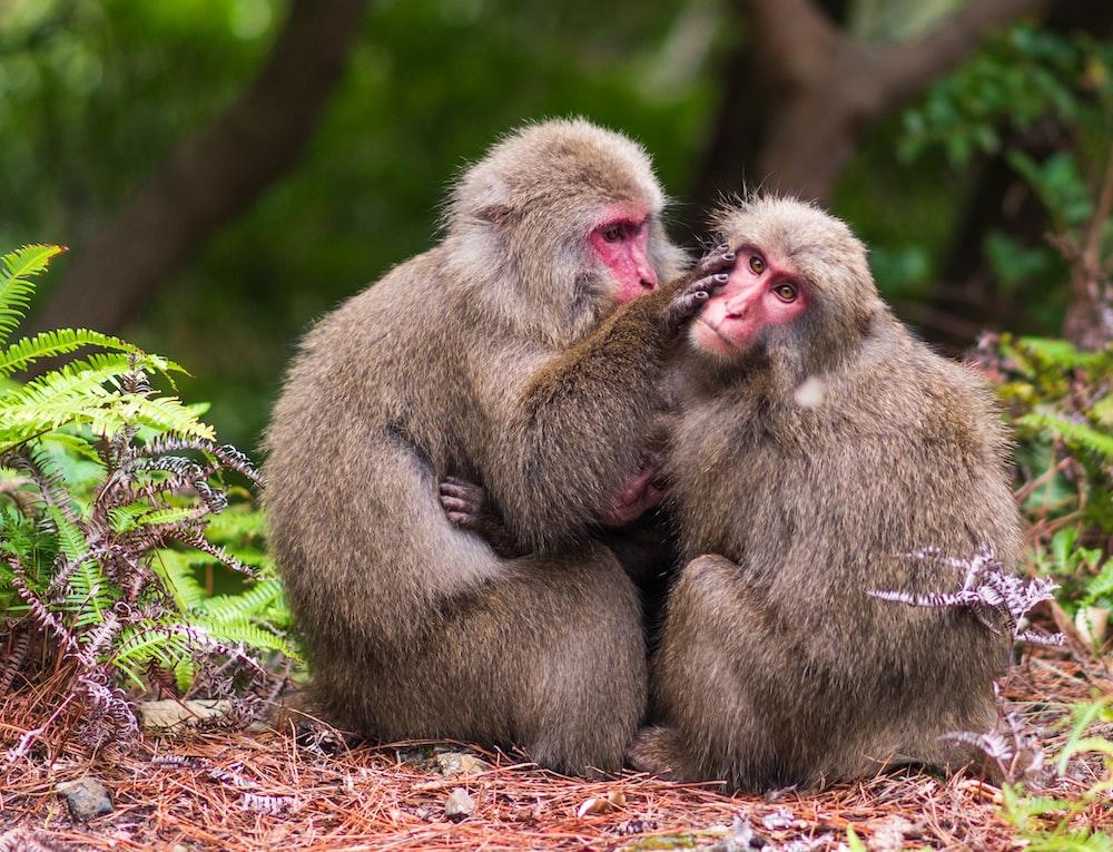 two monkeys sitting on ground during daytime