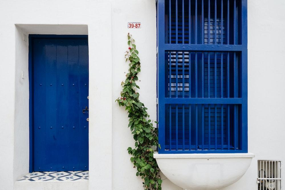 green plant in front of blue wooden door