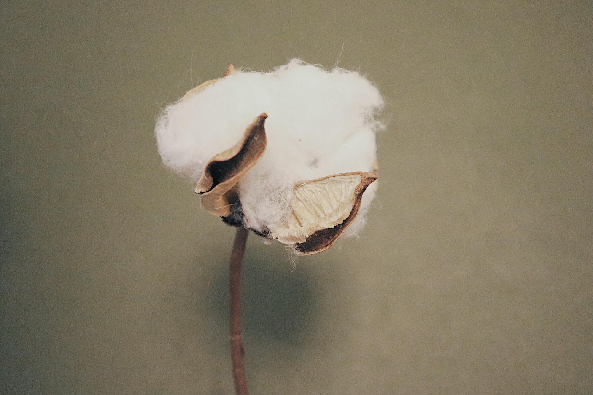 Bomullens miljöpåverkan - och hur du kan minska den
