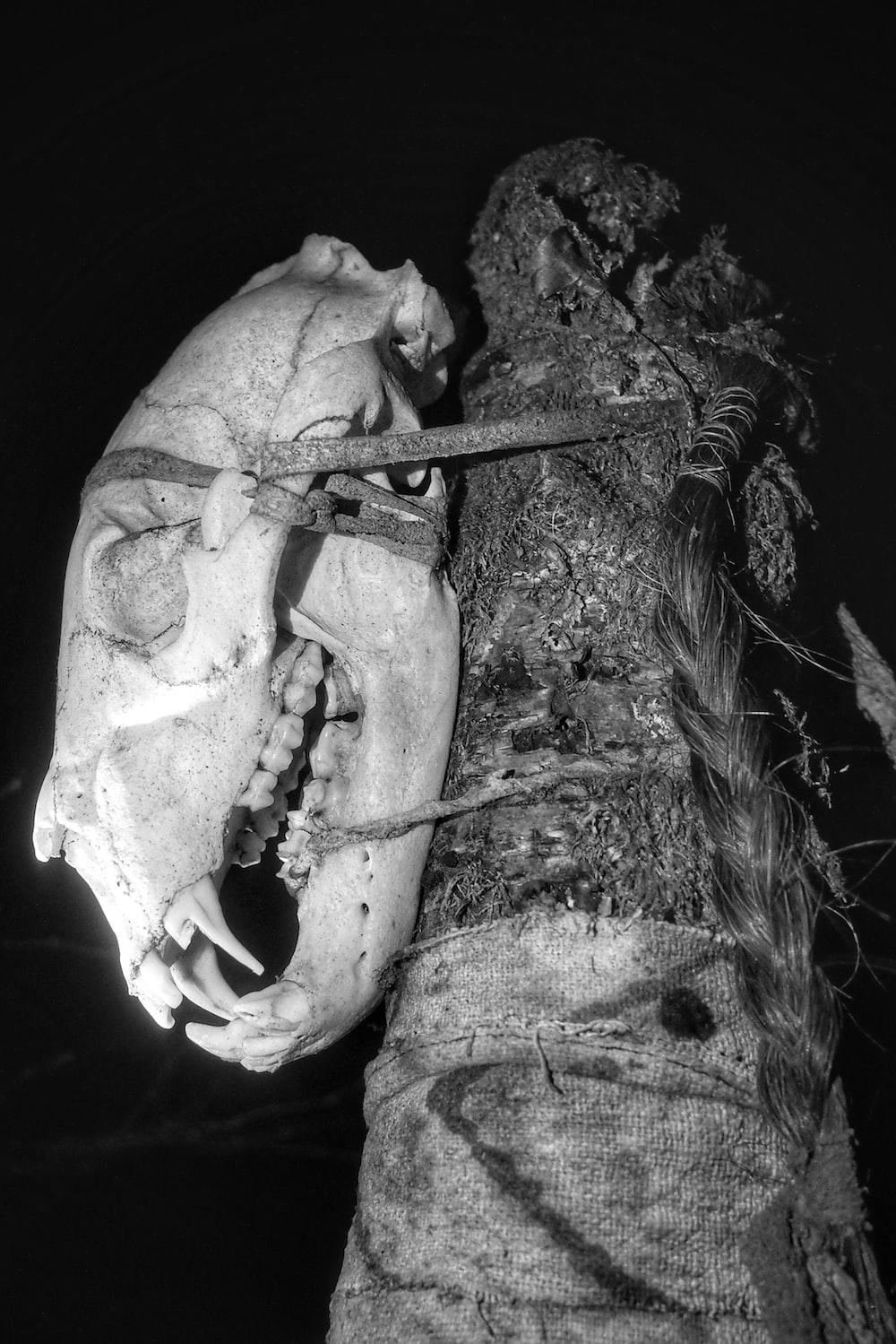 grayscale photo of human skull