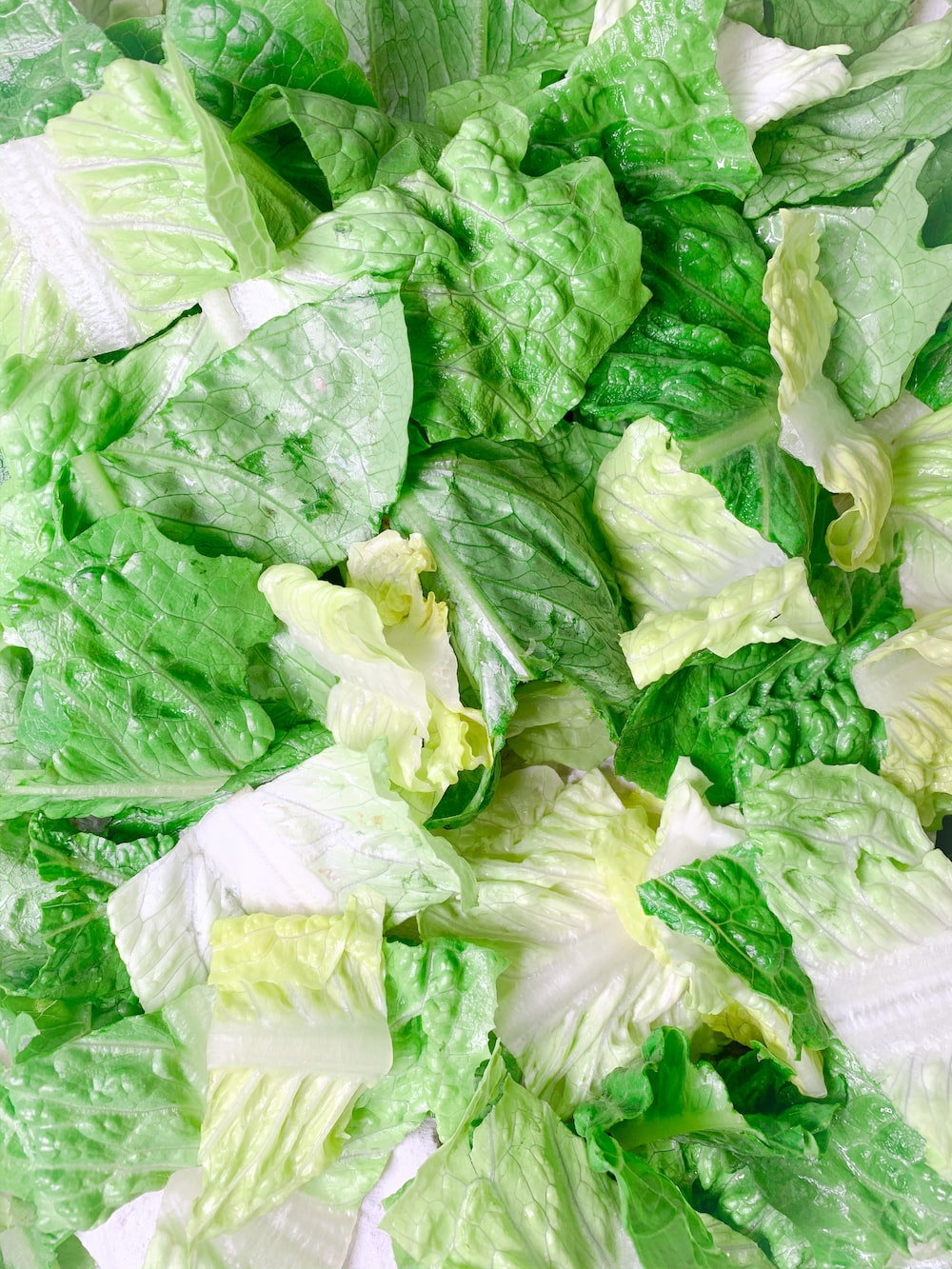green and white cabbage vegetable