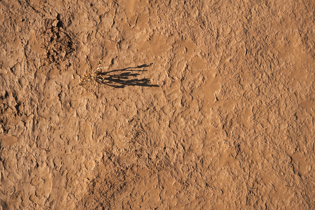 Black and Brown Insect On Brown Soil - unsplash