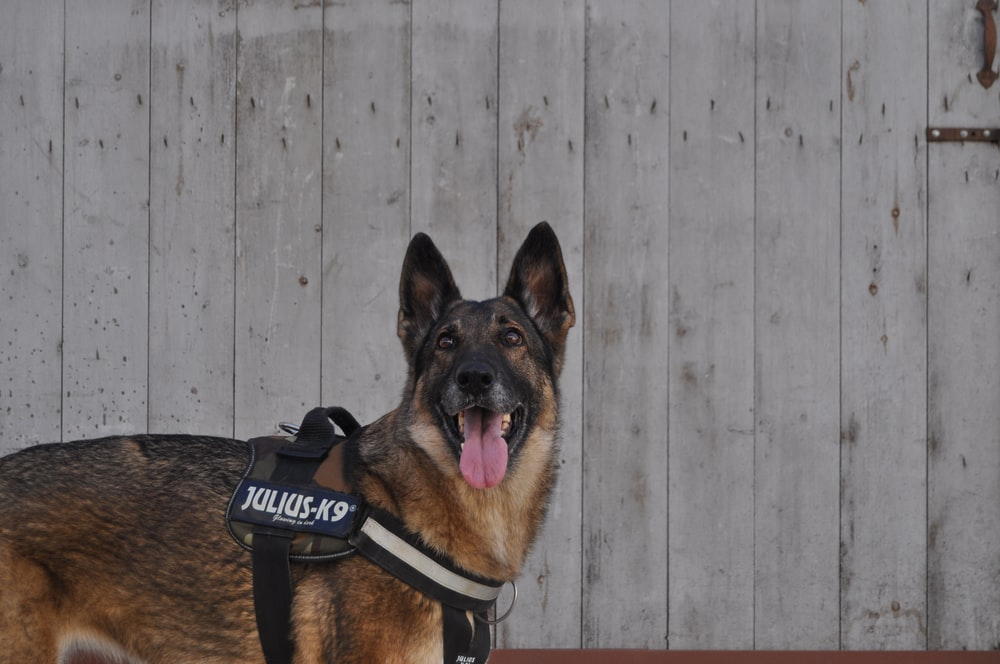 Police Canine