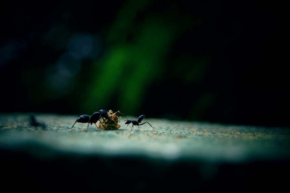 black ant on grey concrete floor in close up photography during daytime