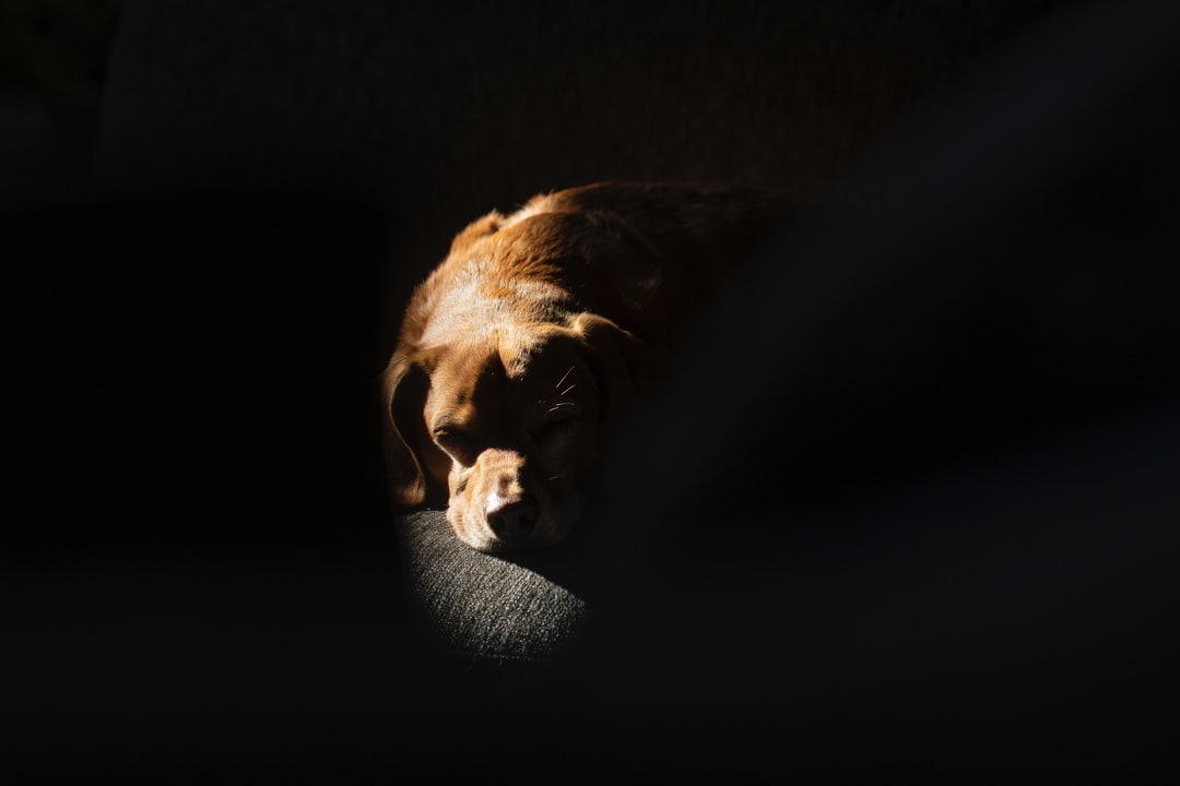 My dog Bentley napping in the sliver of sunlight peaking into our living room.