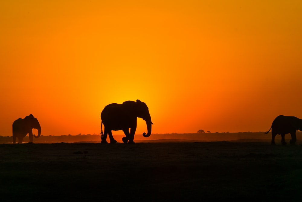 silhouette of elephant on brown sand during sunset