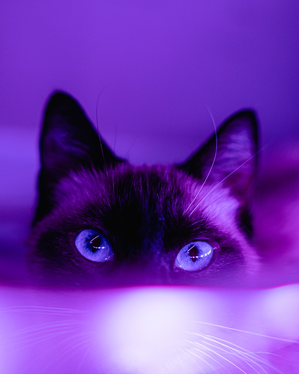 black cat in pink background