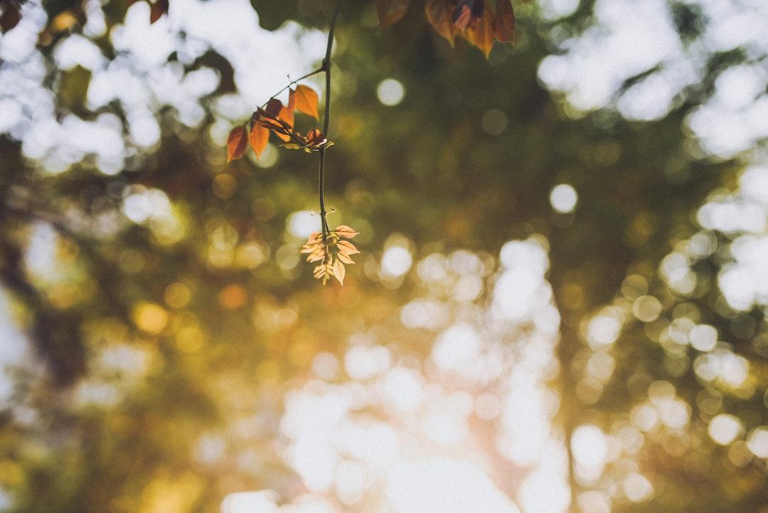 New Spring Leaves Bokeh Against Setting Sun - unsplash