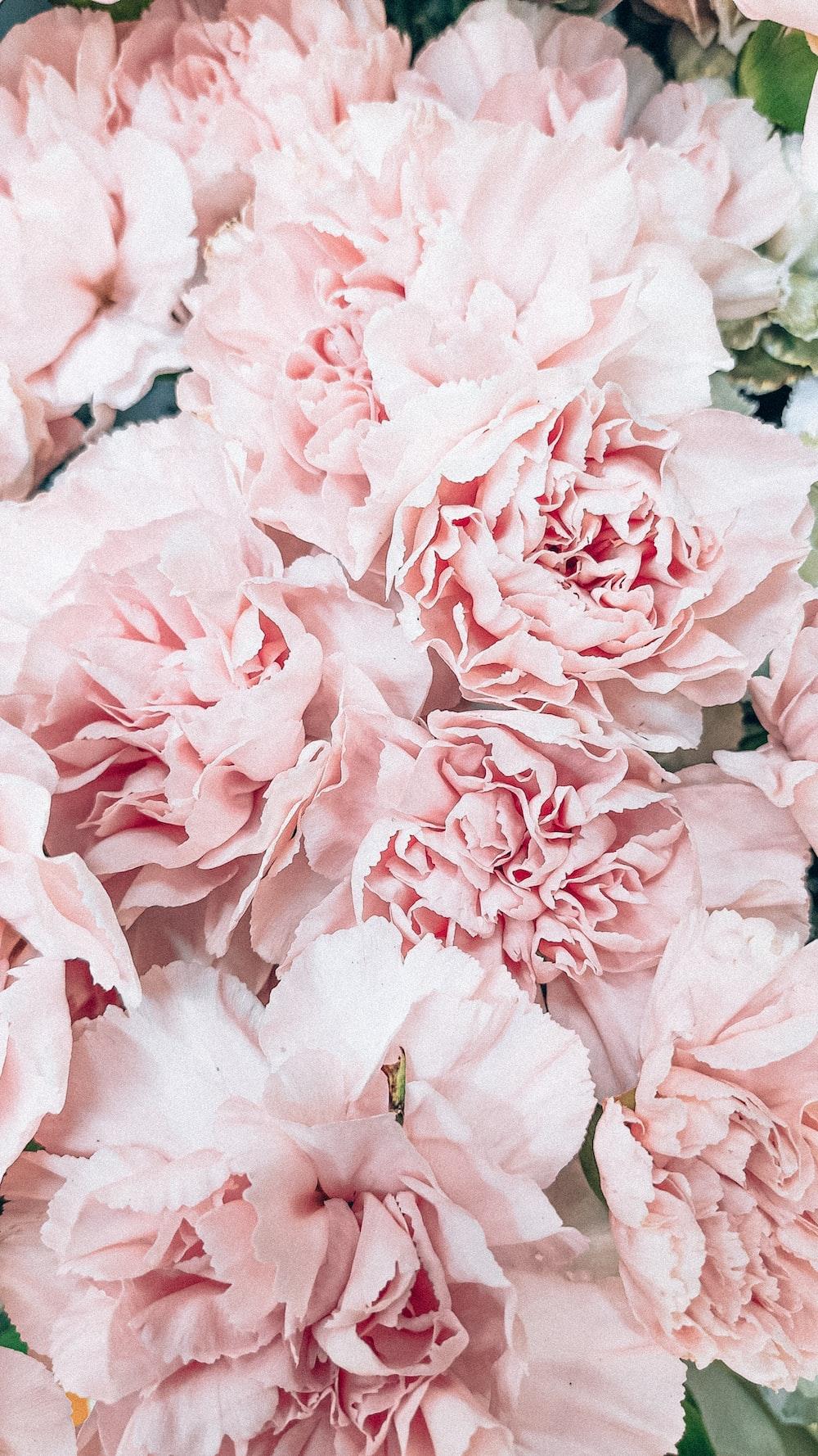 pink flower in macro lens