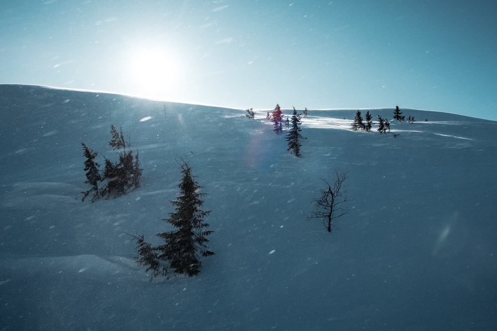 people on snow covered ground near trees during daytime