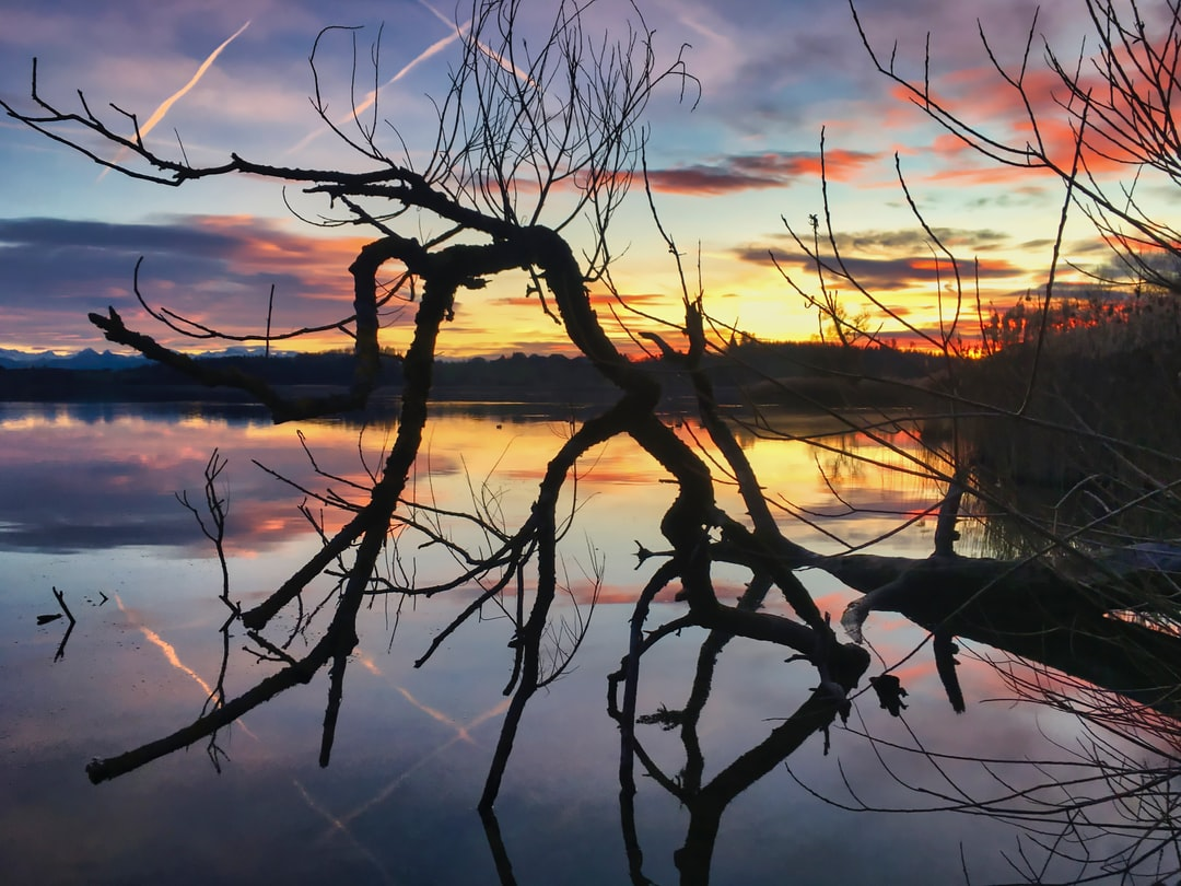 Branches in the lake