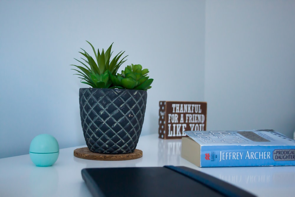 green plant on blue and white ceramic pot