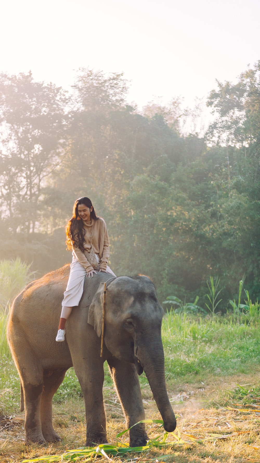 woman riding on black elephant during daytime
