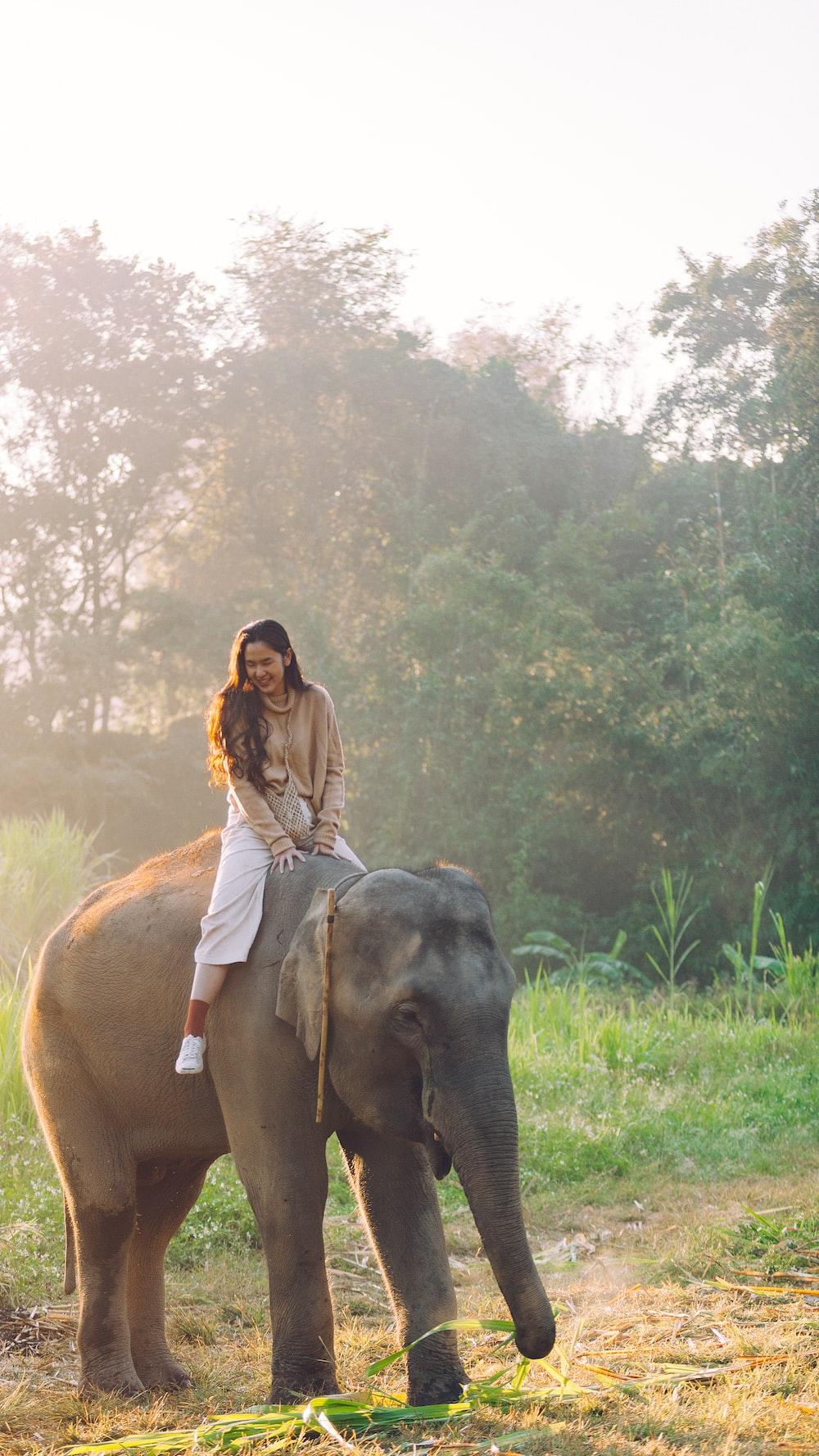 昼間に黒象に乗る女性