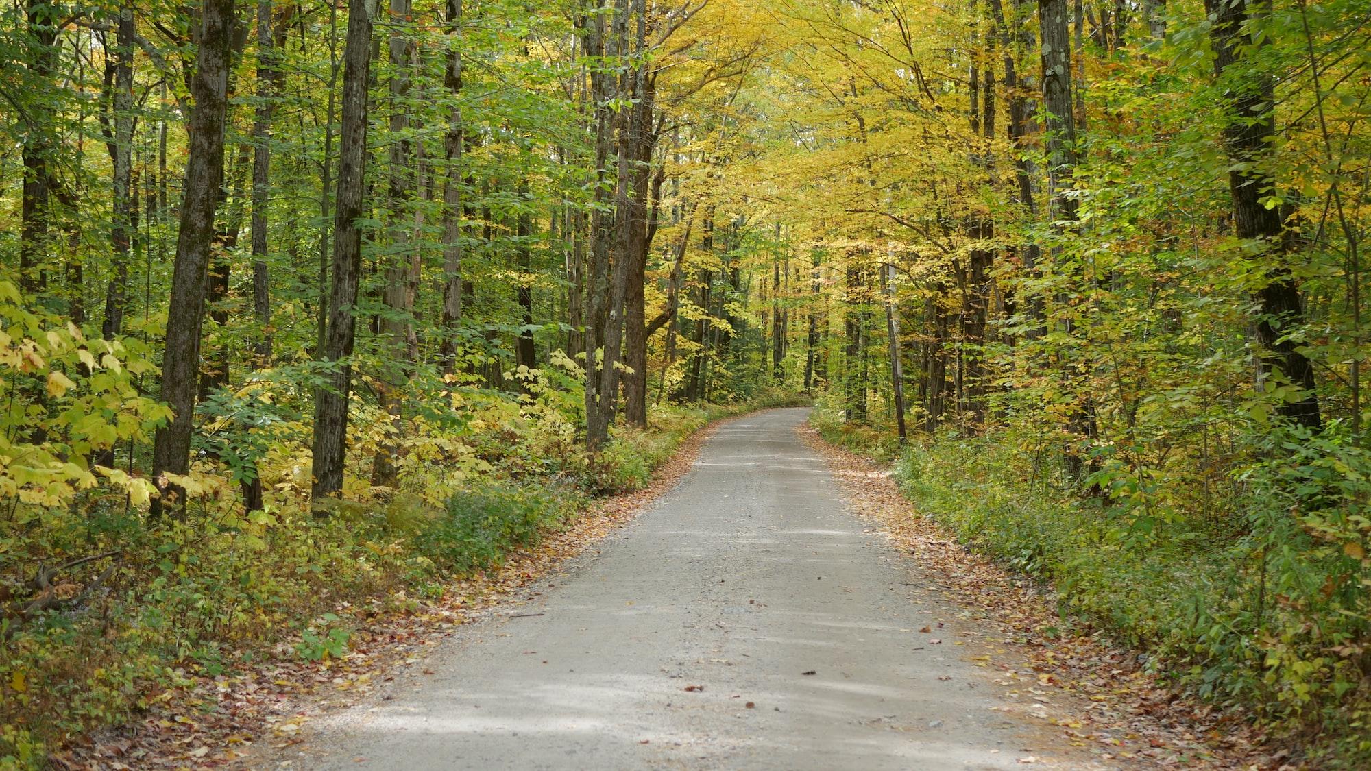 Random walk in Berkshires