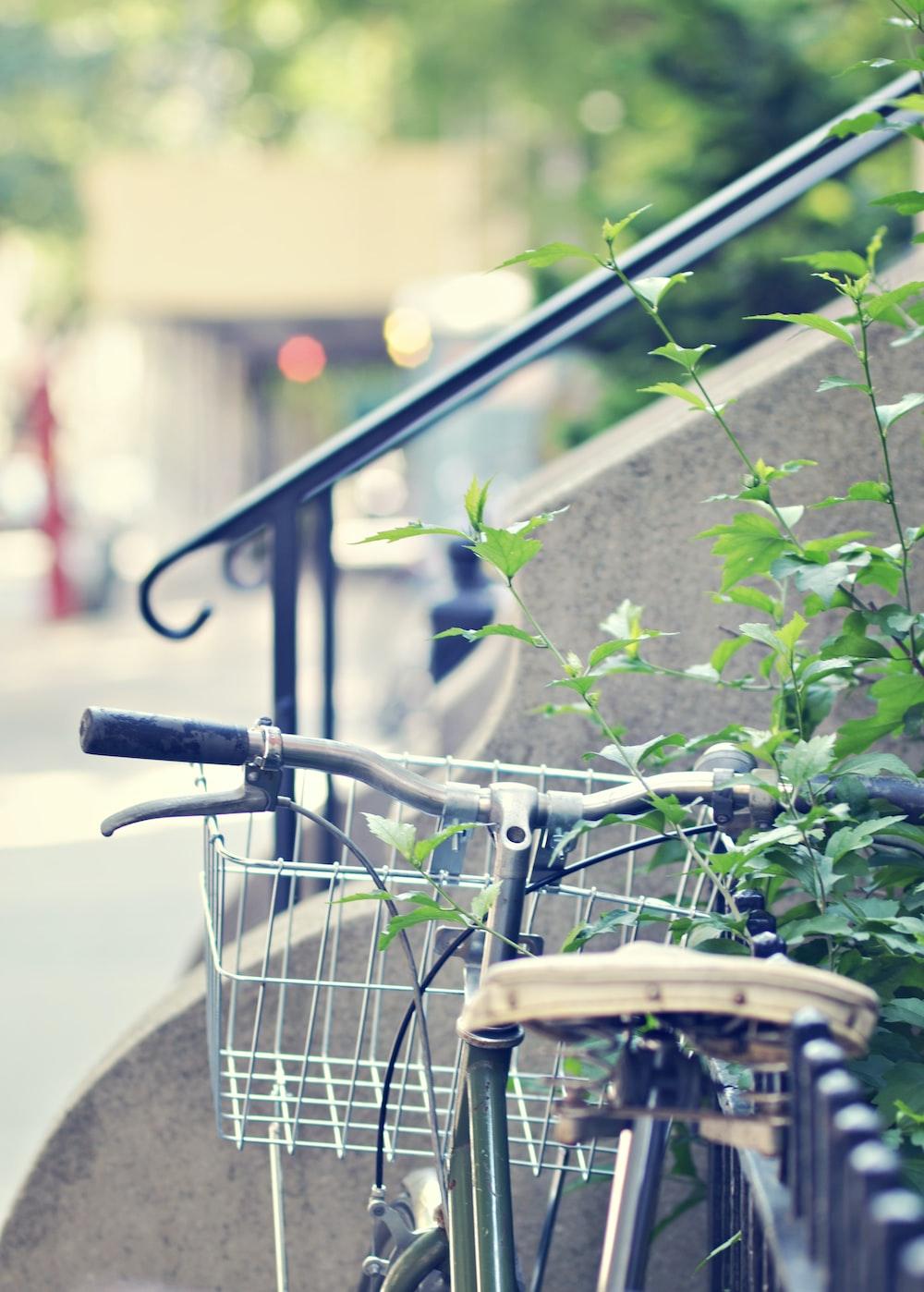 gray city bike parked beside green plants