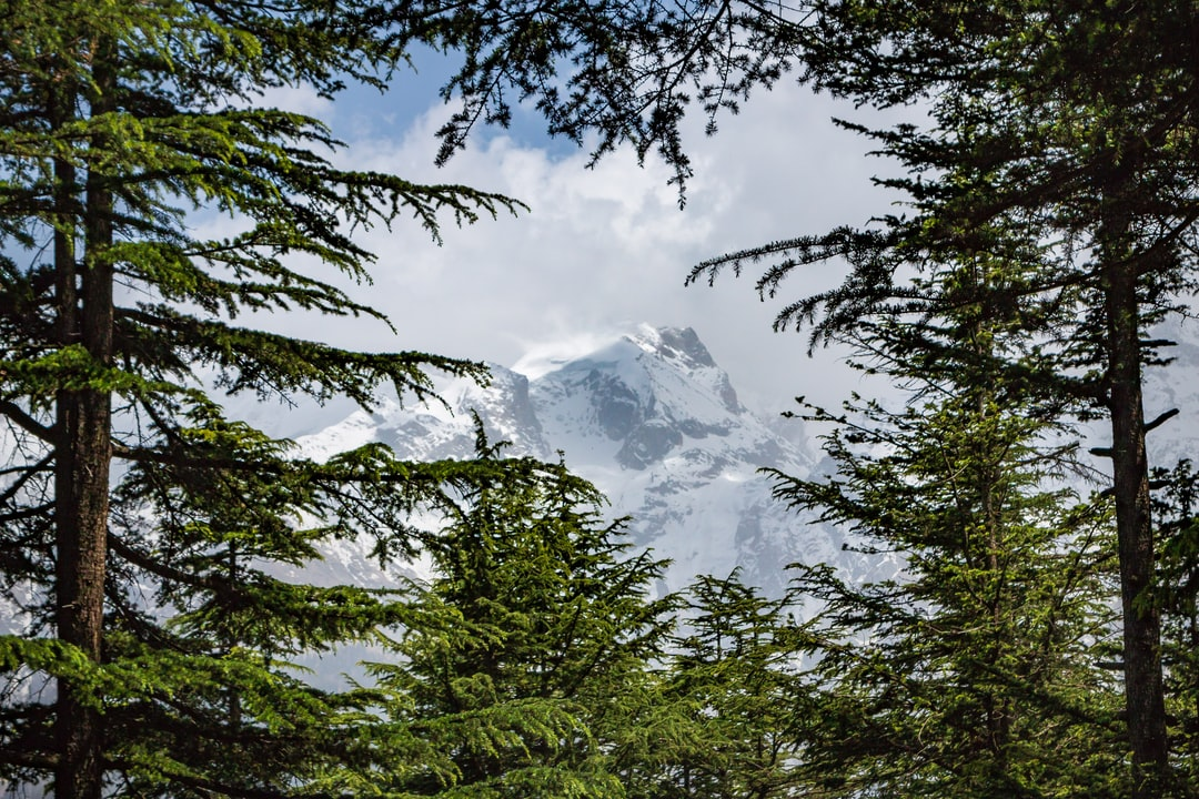 Pine Framed Peak