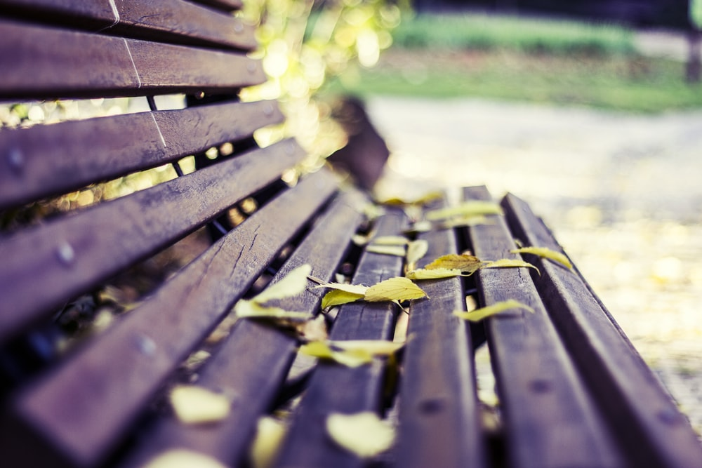 brown wooden bench with yellow and green leaves on top