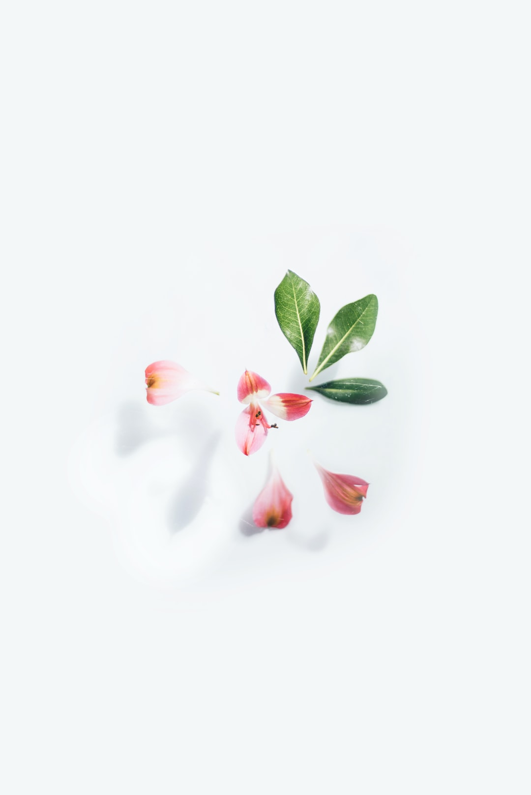Deconstructed flower on white background