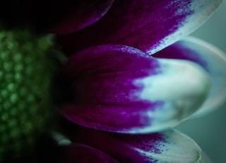 purple and white flower in macro shot