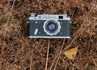 black and silver camera on brown dried leaves