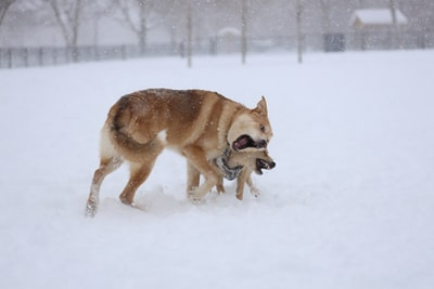 brown and white short coated dog on snow covered ground during daytime blizzard zoom background