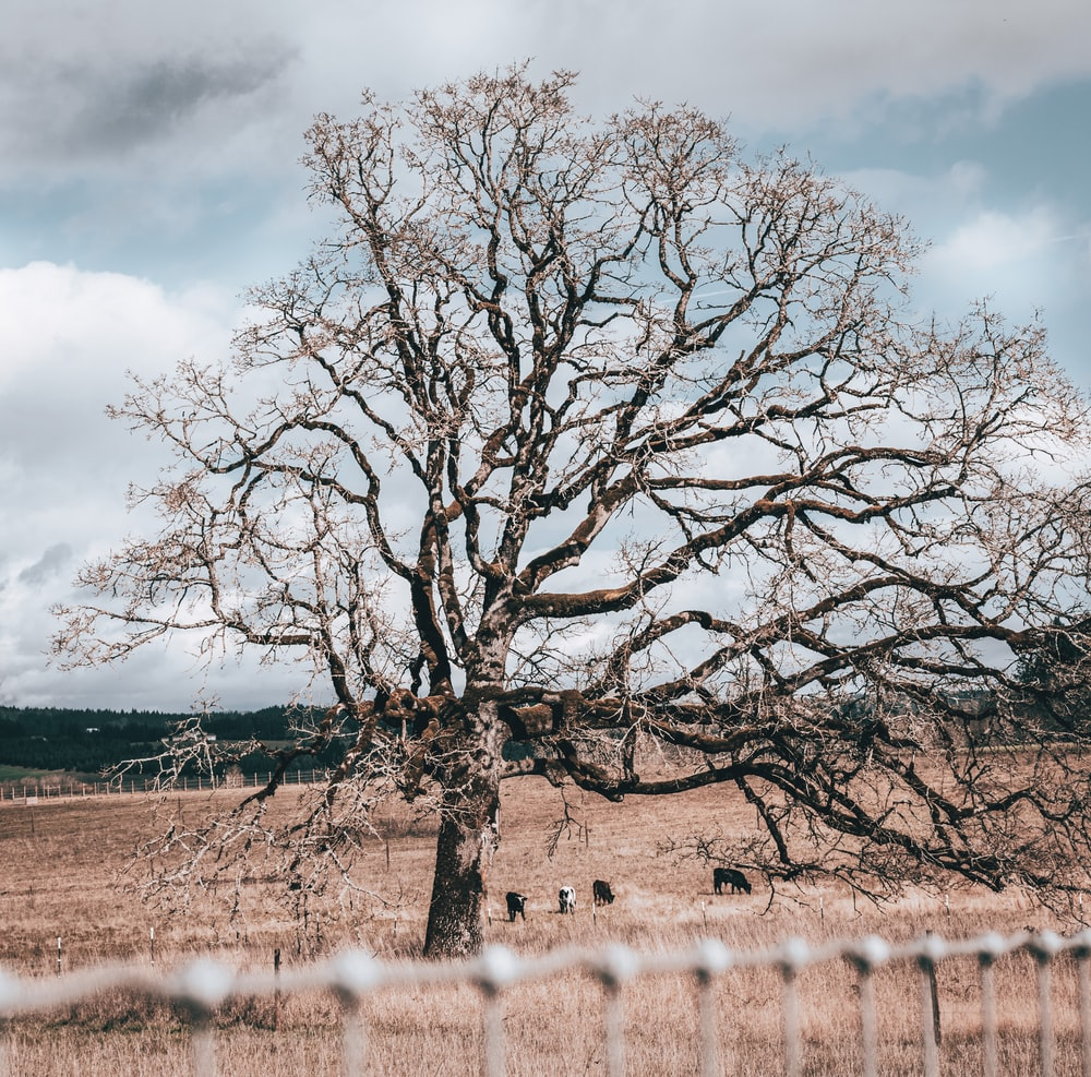 leafless tree near body of water under cloudy sky during daytime