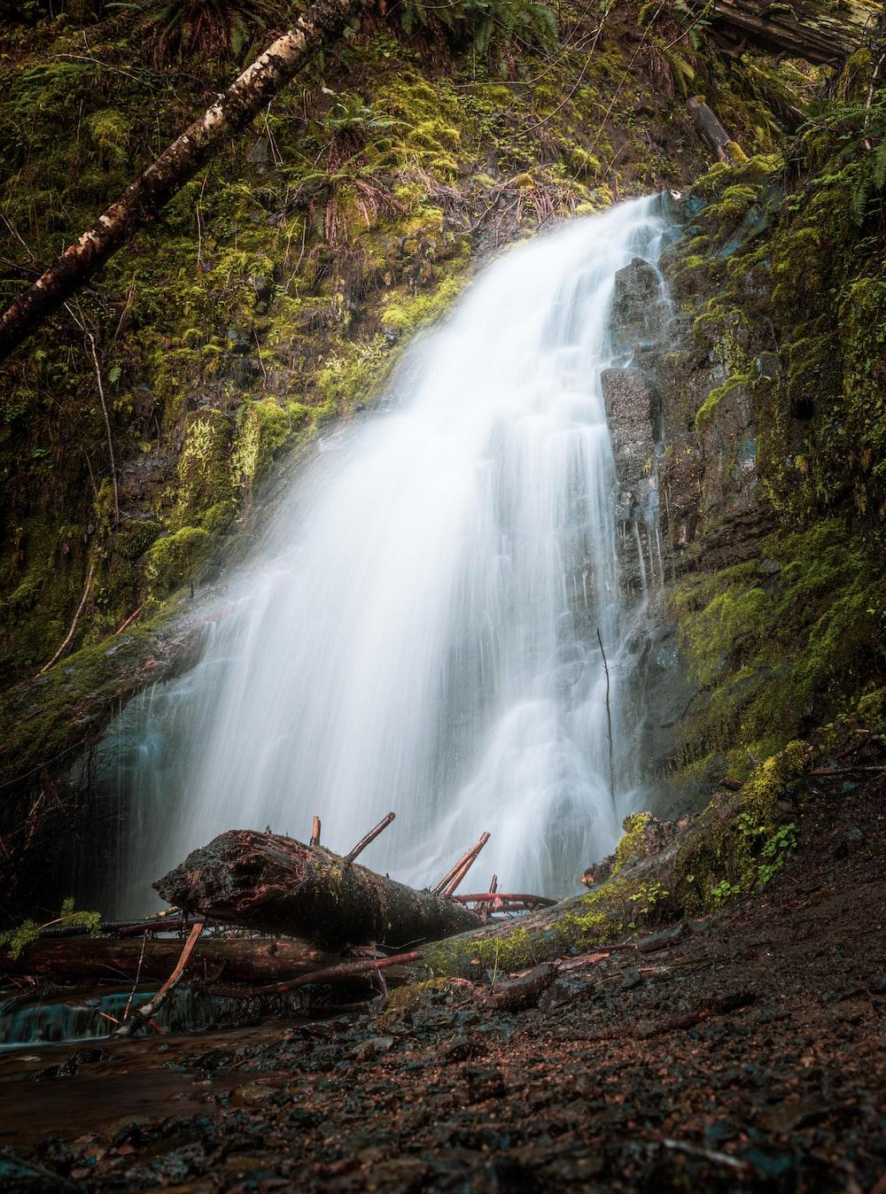 brown tree log near waterfalls