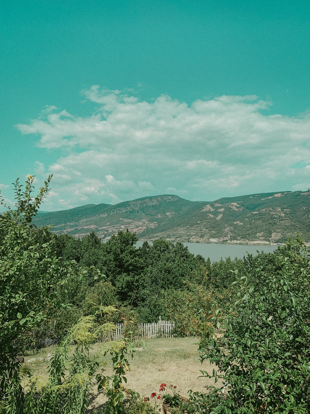 green trees near body of water under blue sky during daytime