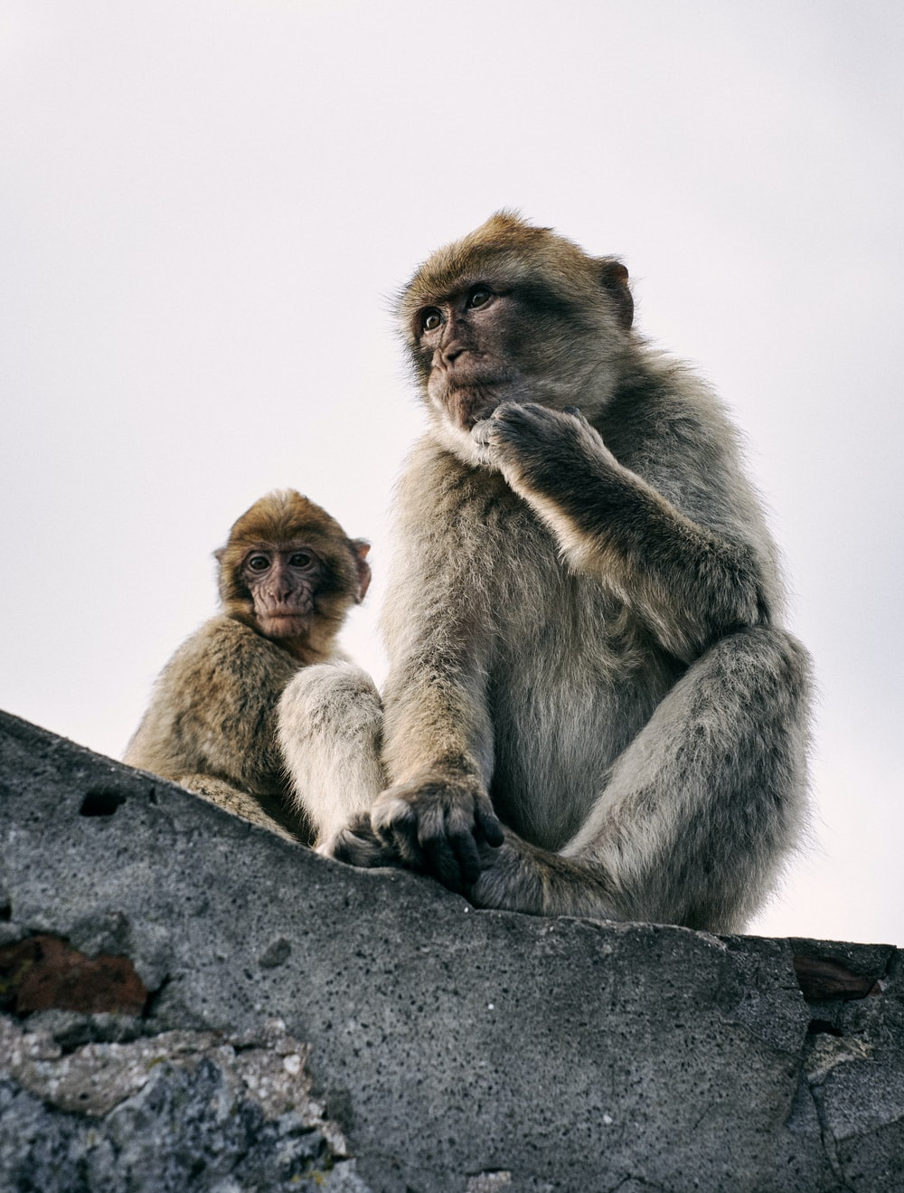 two monkeys on gray rock during daytime
