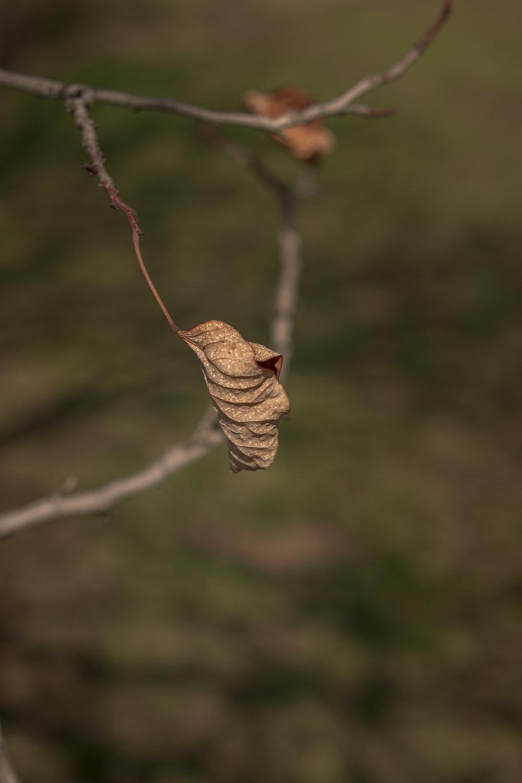 brown dried leaf on brown stem