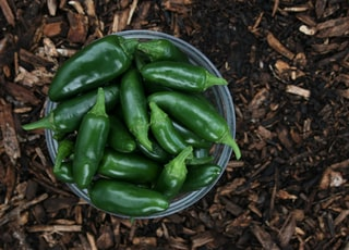 green chili peppers on brown soil