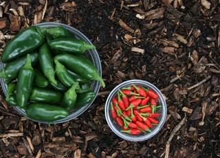 green and red chili peppers on white ceramic bowl