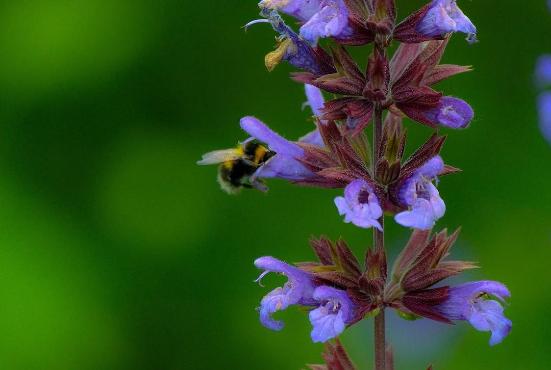 B U Z Z Y  B E E   #bee # flower #vibrant #closeup
