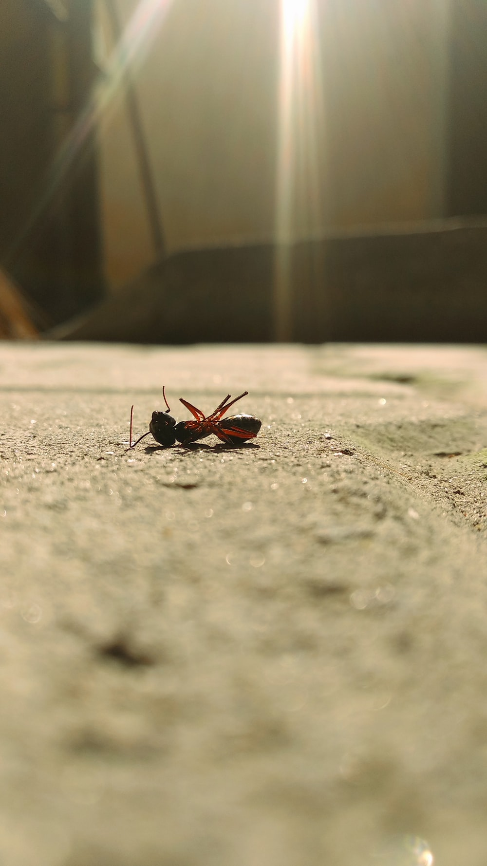 black and red insect on gray concrete floor