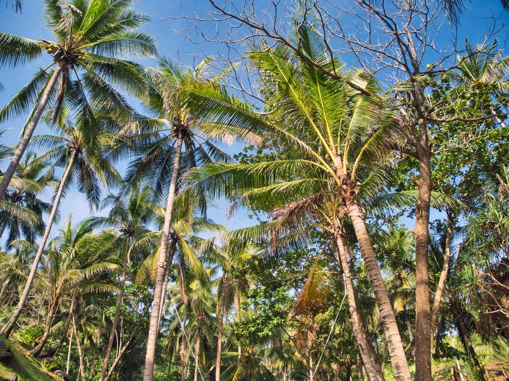 green coconut trees under blue sky during daytime