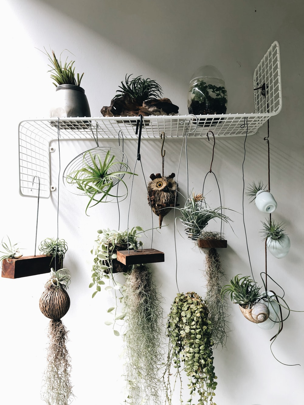 green and brown hanging decor