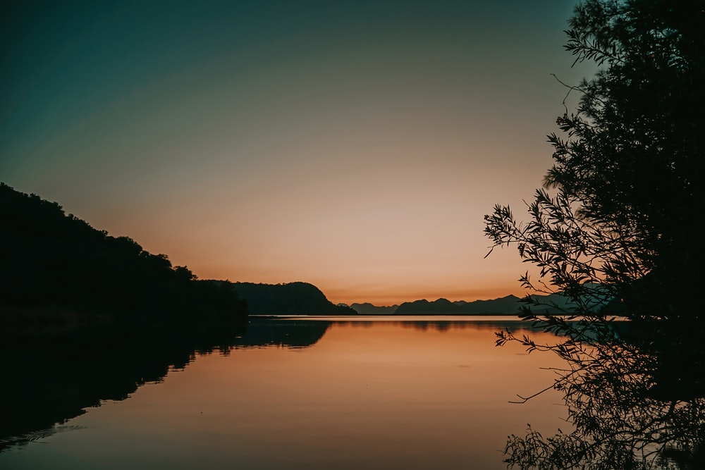 silhouette of trees near body of water during sunset