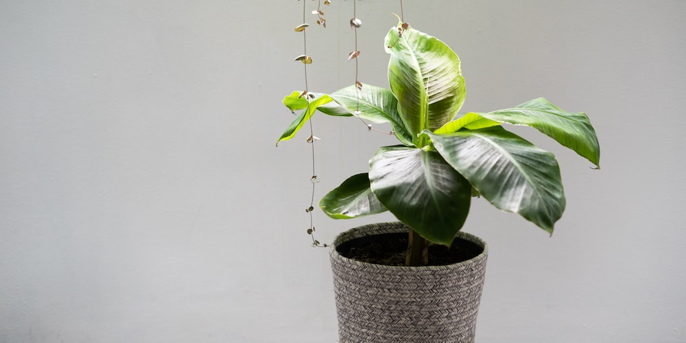green plant on brown woven pot